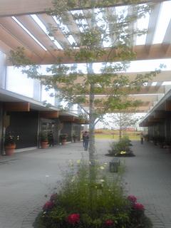 花菜ガーデン.JPG