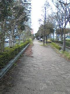 秋ま歩道.jpg